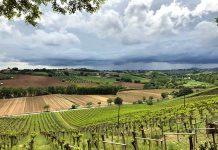 Winnice w Abruzji