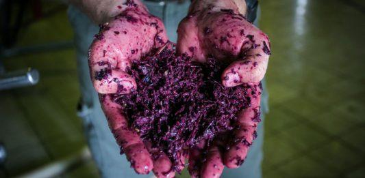 odpady winiarskie wpływ winiarstwa na środowisko