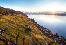 Szwajcaria: widok na winnice jesienią
