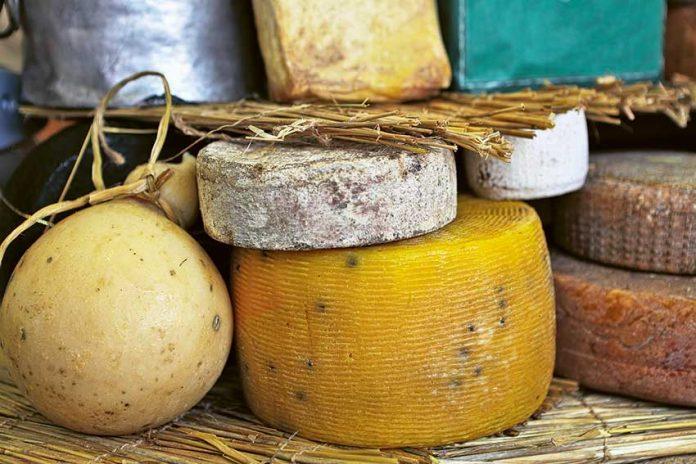 Gouda udomowiona, czyli jak zrobić ser