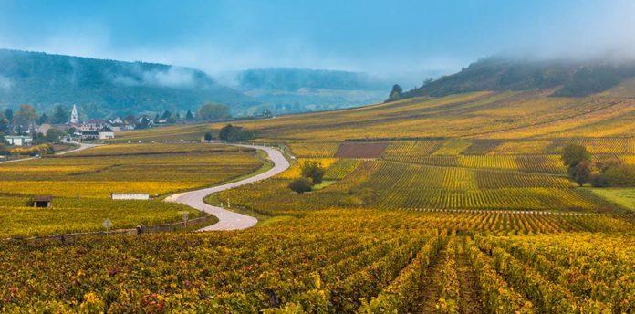 Burgundia nieco tańsza
