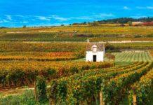 Burgundia plus