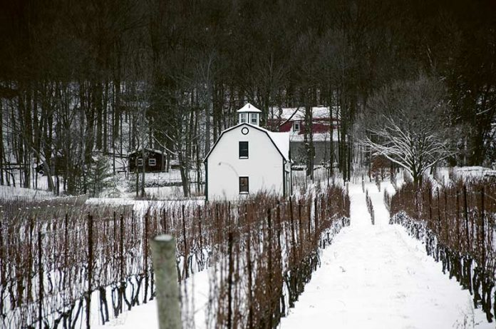 Winnica w Ontario