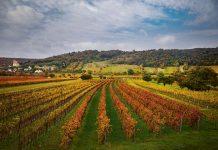 Winnica w Austrii