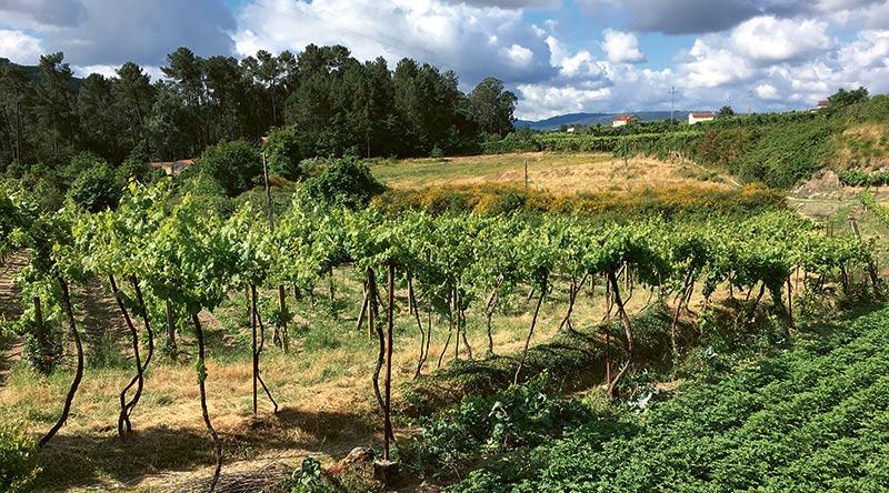 Winnice Vinho Verde