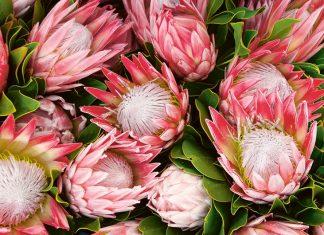 Stanford Hills | Winnice wśród kwiatów