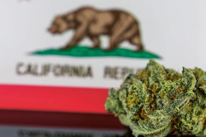 Zielona Kalifornia. Winnice kontra marihuana