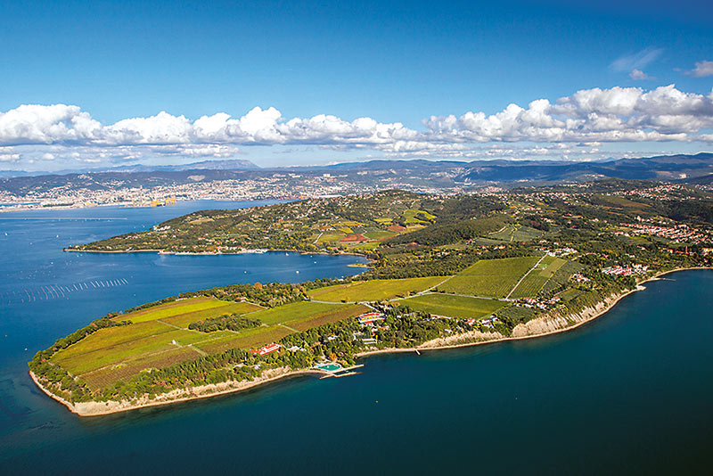 Półwysep Ankaran i winnice Vinakoper