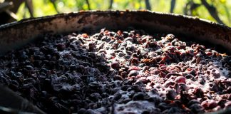 Wytłoki z winogron