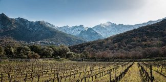 Winnice na Korsyce.