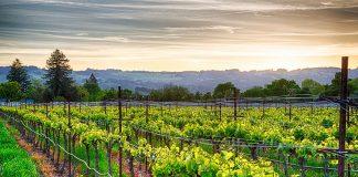 Kalifornia – kolejne kultowe winiarnie zamykane. Ale ich nazwy pozostaną…