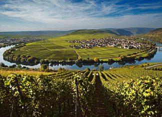 fot. copyright by Deutsches Weininstitut (DWI)