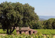 Francuskie pożegnanie z winem? Coraz mniej winiarzy w kraju